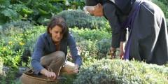 Frau und Nonne pfücken Kräuter im Garten